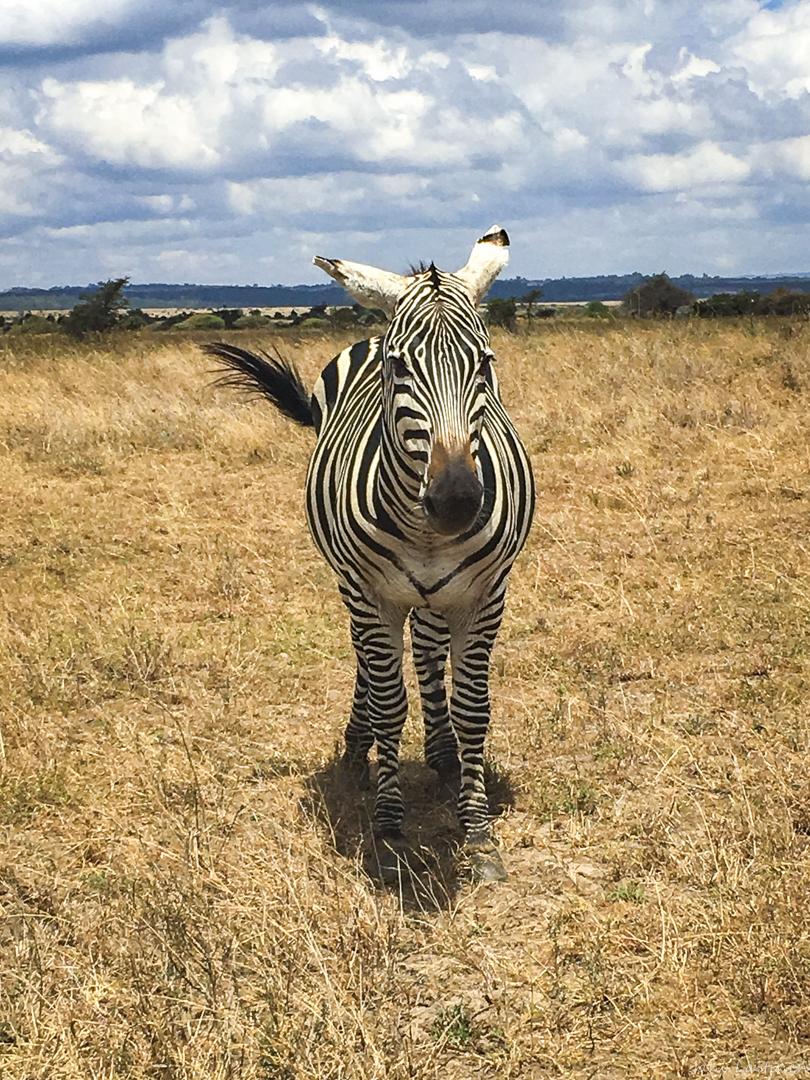 Afrikka-3.jpg