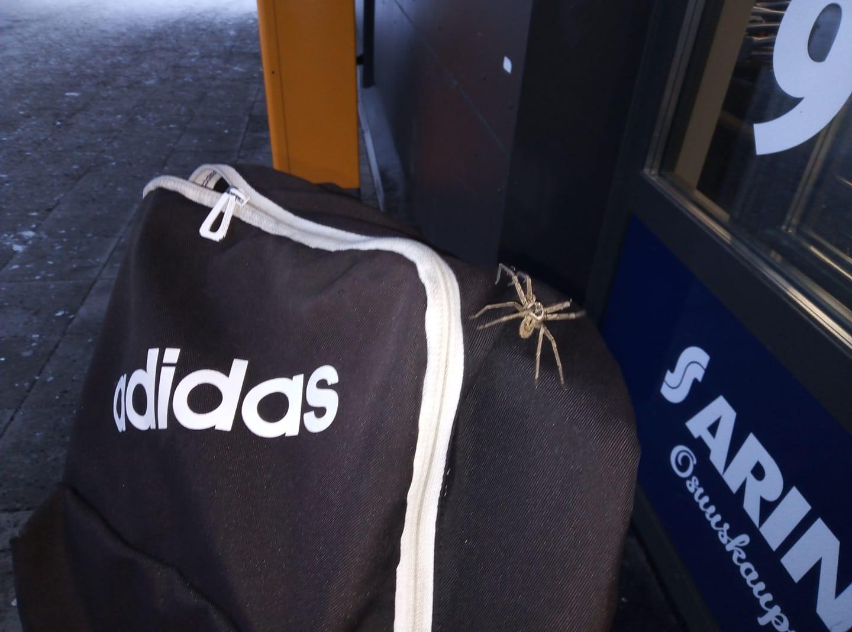 hämähäkki1.jpg