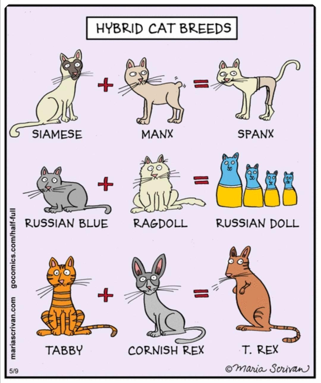 Hybrid_cat_breeds.jpg