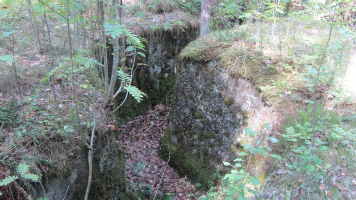 Länsimäki metsä 016.JPG