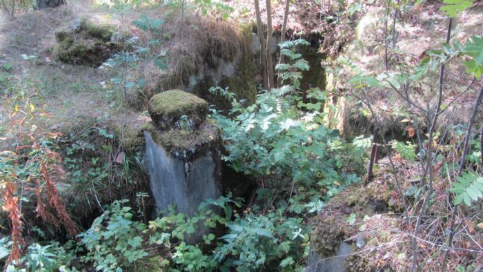 Länsimäki metsä 022.JPG