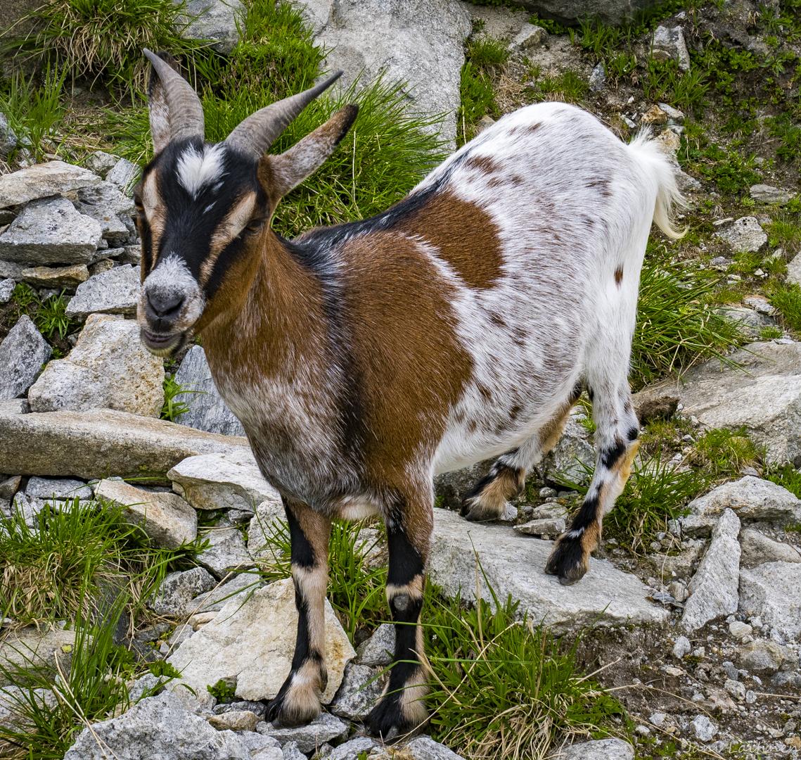 Mayrhofen-161.jpg