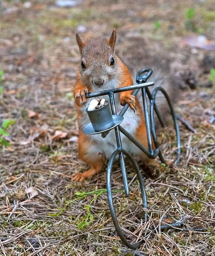 Orava.PNG